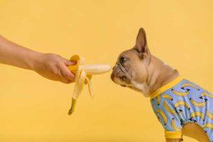 Dog Eating Banana