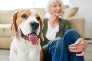Pet Aging