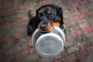 Dog Hungry