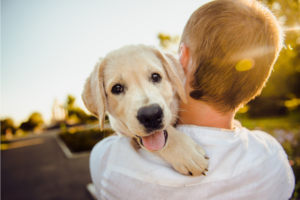 What to Consider When Getting a New Puppy
