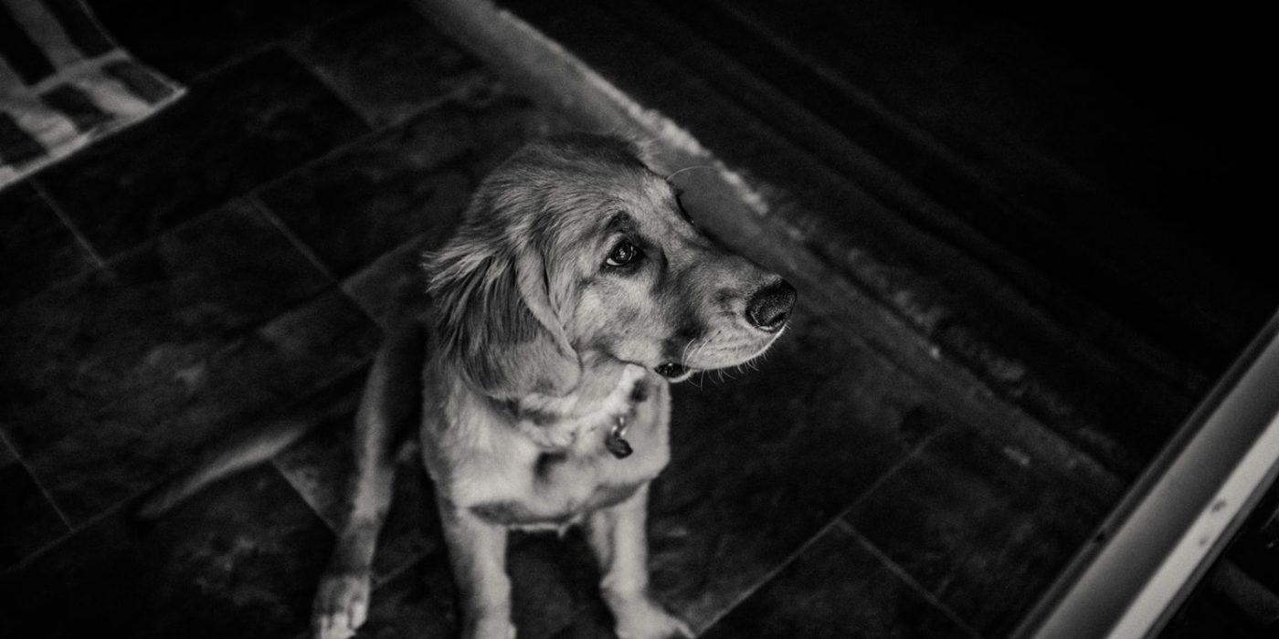 Black and White Sad Dog