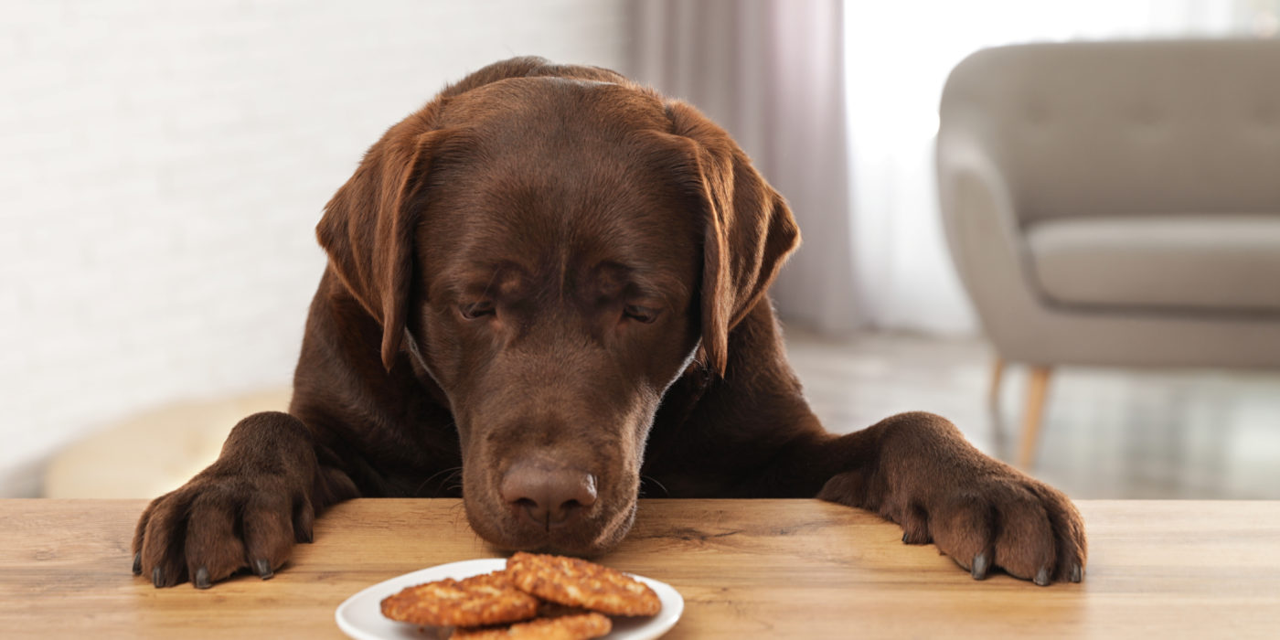Toxic Foods for Dogs & Cats and How to Avoid Them